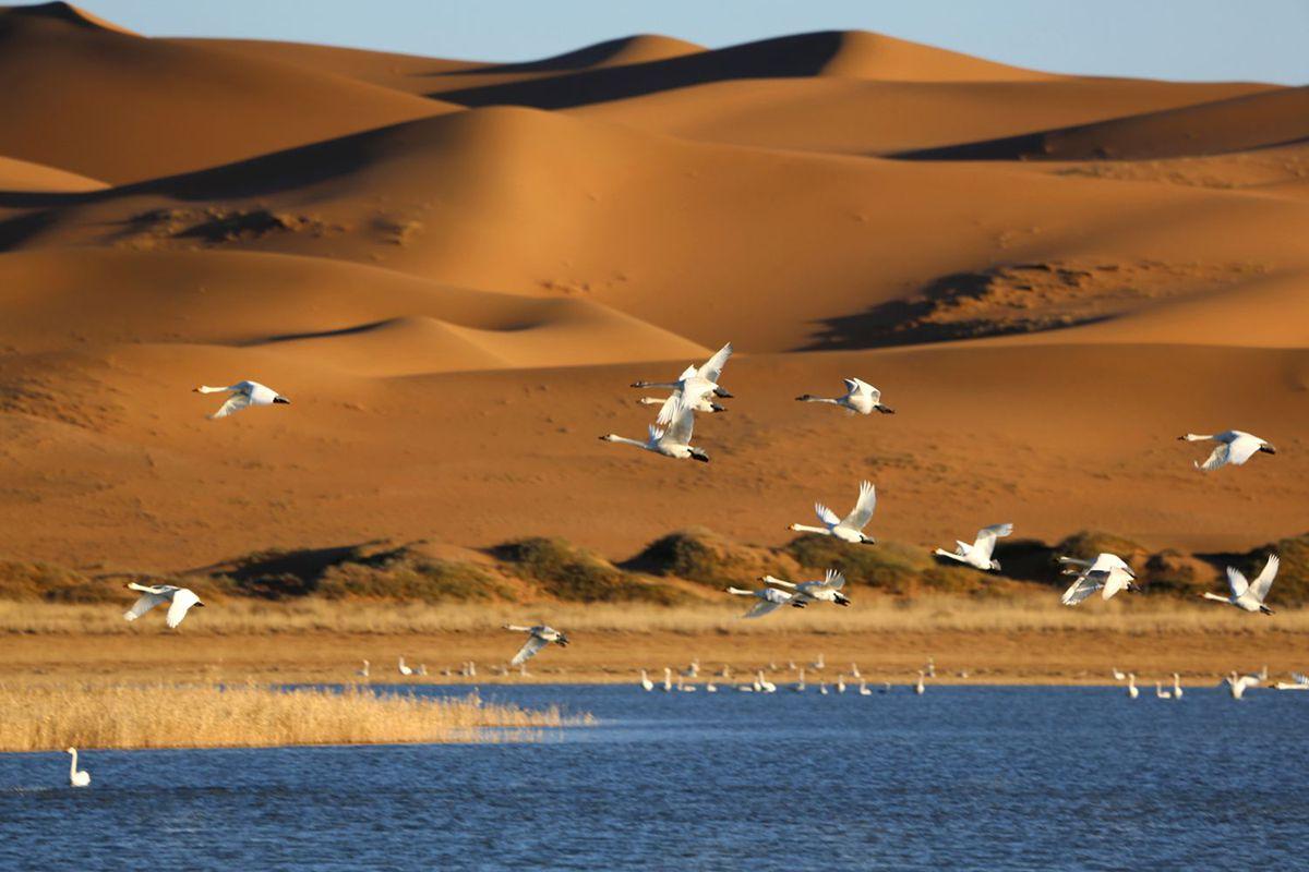 【2019来宁夏必去的地方--腾格里沙漠穿越】二日游